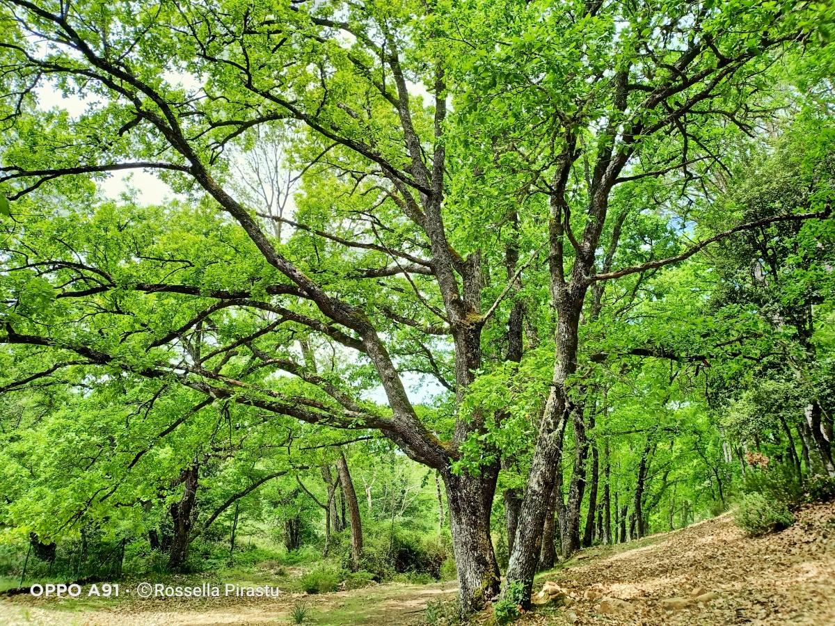 Perchè la Forest Therapy è nata inGiappone?